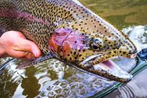 Minturn Anglers: Colorado's Premier Fishing Guides