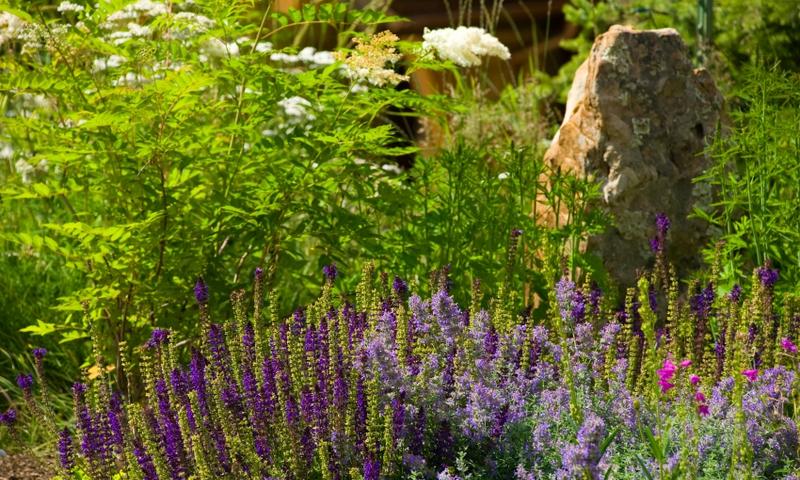 Wildflowers in Betty Fork Alpine Gardens