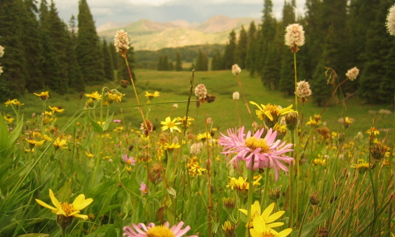 Vail Pass Scenic Drive