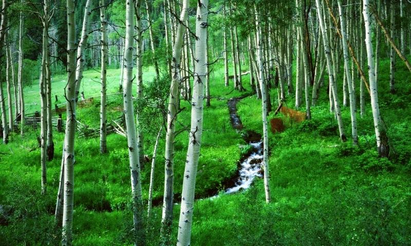 Hunter Fryingpan Wilderness Frying Pan White River National Forest Colorado