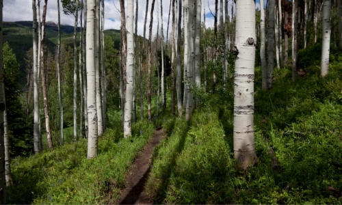 Vail Hiking
