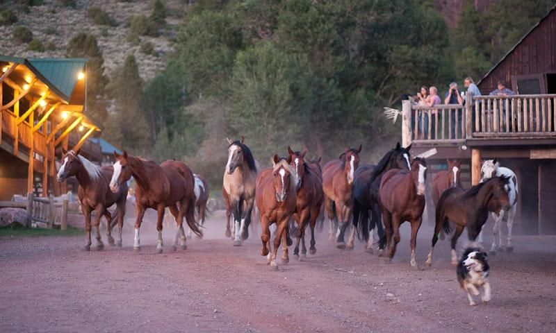 Horse Run through Black Mountain Ranch in Vail Colorado