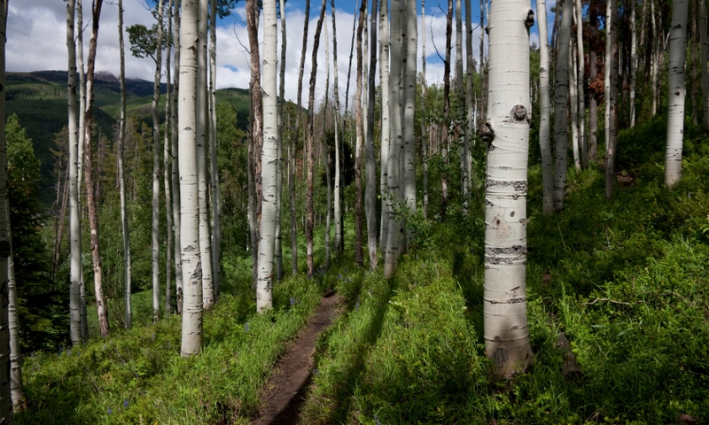 Hiking Trail in Vail
