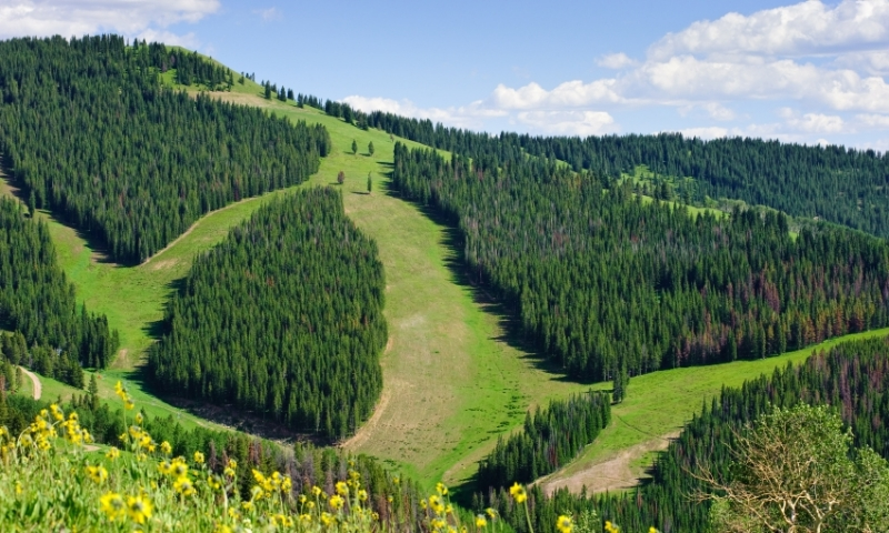 Summer Ski Runs at Vail