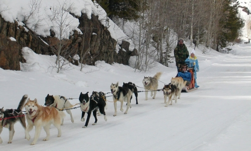 Vail Colorado Dog Sledding