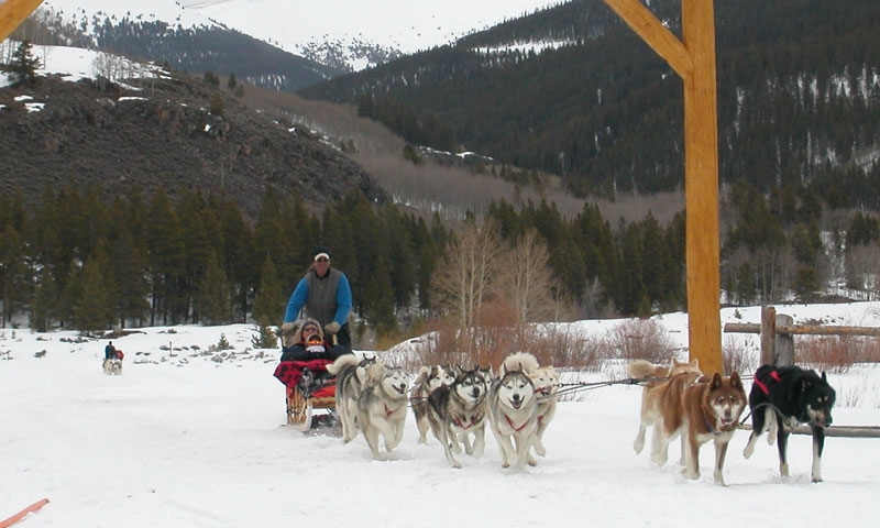 Dog Sledding in Vail Colorado