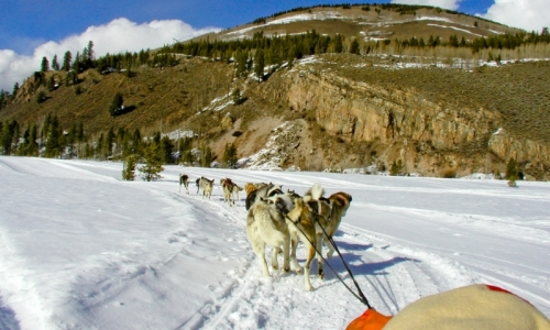 camp hale dog sledding