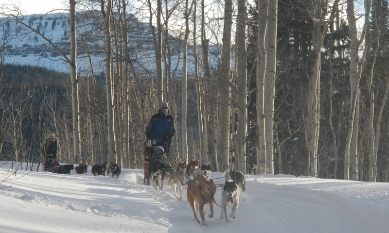 Dog Sledding Steamboat Springs