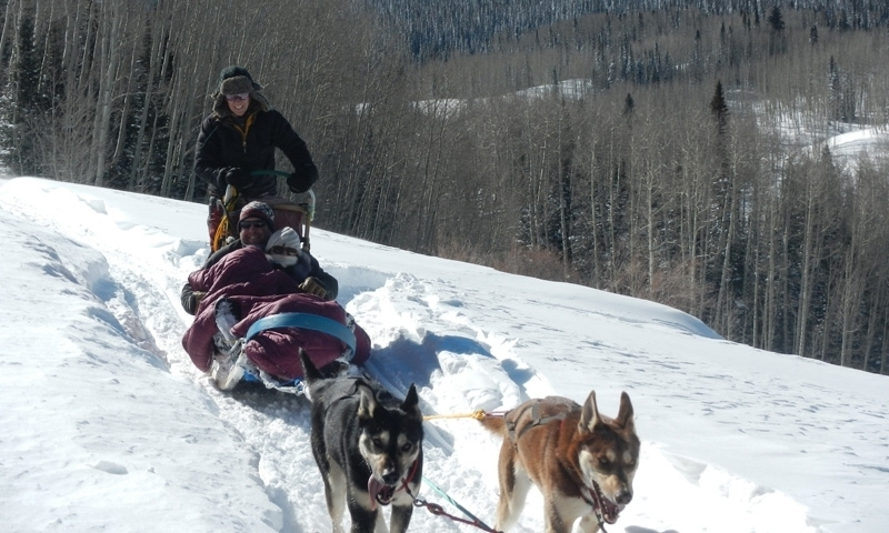 Vail Colorado Dog Sledding Dog Sled Tours Alltrips