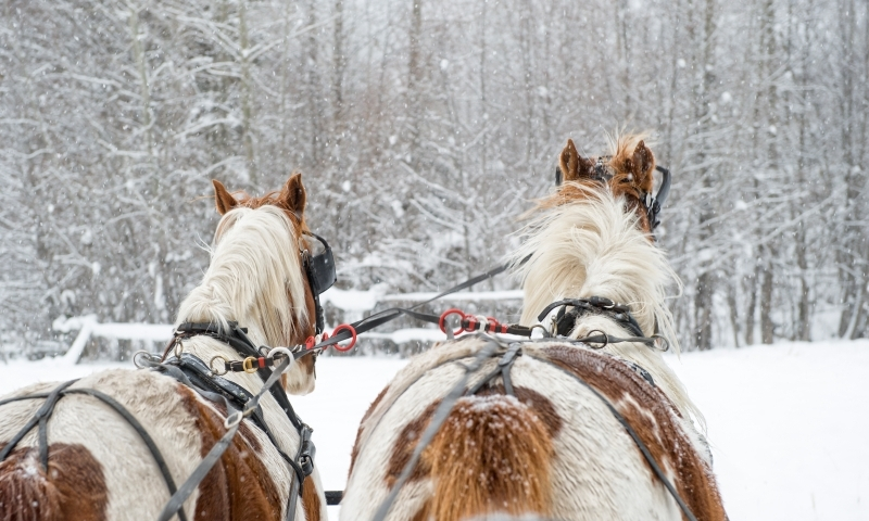 Sleigh Ride Winter Horse